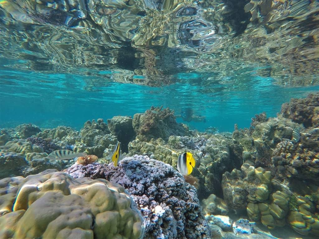 Jardin de Coral
