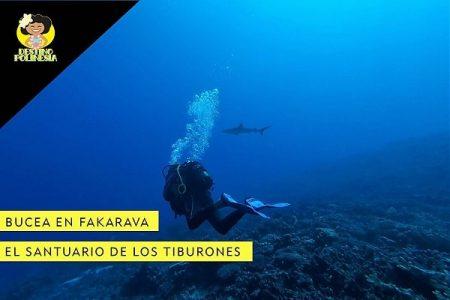 Bucear en Fakarava – El santuario de los tiburones