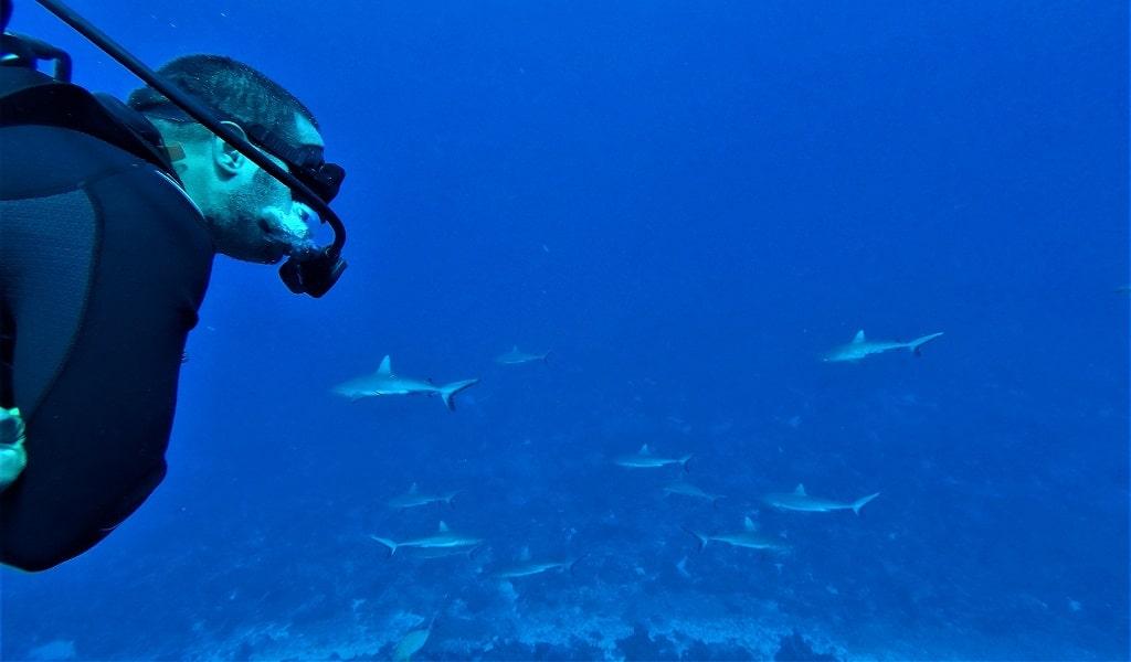 tiburones fakarava