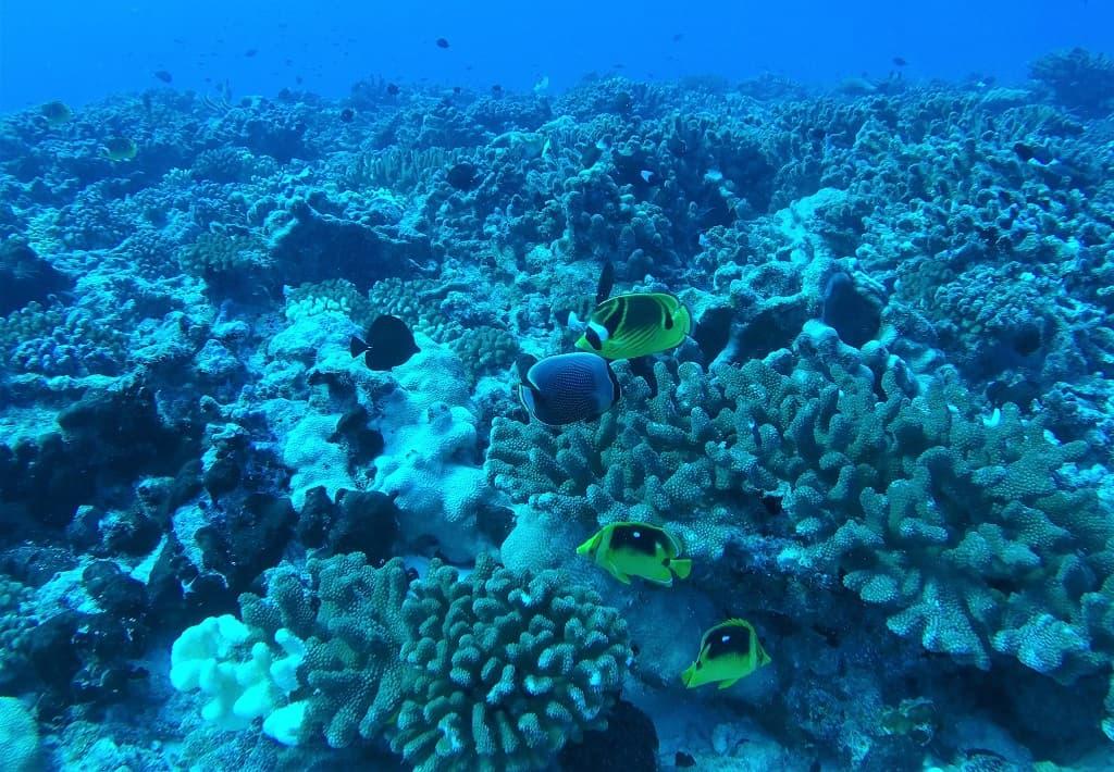 coral Fakarava