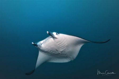 Bucear en Bora Bora – Experiencia real y detalles