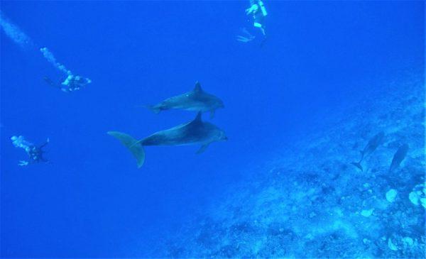 delfines_rangiroa